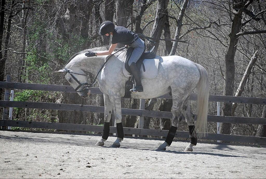 horse-rider-txa-one